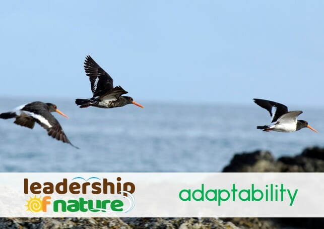 leadership of nature adaptability