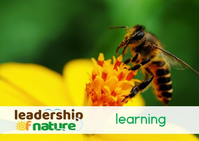 leadership of nature learning
